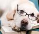 מאלף כלבים בירושלים – אילו שיטות אילוף הוא יוכל להציע לכם?