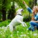 אילוף כלבים – שינוי לחיים